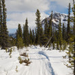 Well used winter trail in boreal forest — Stock Photo