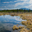 Stock Photo: Marshland pond in boreal forest