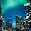 Northern Lights, Aurora borealis and winter forest - Stock Photo
