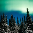 Northern Lights, Aurora borealis and winter forest — Stock Photo #6229070