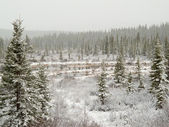 Snow falling on marshland pond in boreal forest — Stock Photo