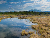 Marshland pond in boreal forest — Stockfoto