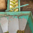 Stock Photo: Olive Mill Conveyor Belt Feed