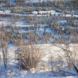 Snowy boreal forest - Stock Photo