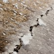Stock Photo: Ice Crack