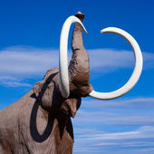 Woolly Mammoth — Stock Photo