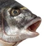 Fish Head — Stock Photo #6043802