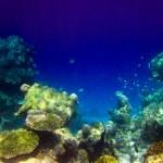 Постер, плакат: Under water world at Maldives