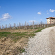Italian villa with vineyard: spring season - Stock Photo