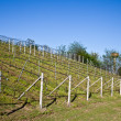 Vineyard irrigation system — Stock Photo