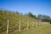 Vineyard irrigation system — Stockfoto