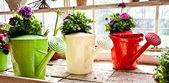 Garden - Watering can — Stock Photo
