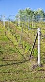 Sistema de riego del viñedo — Foto de Stock