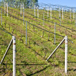 Vineyard irrigation system - Stock Photo