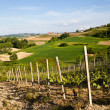 Italian vineyard: Monferrato - Stock Photo