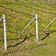Stock Photo: Vineyard irrigation system