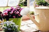 Garten - gießkanne — Stockfoto
