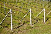 Vineyard irrigation system — Stock Photo