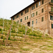 Italian vineyard - Monferrato - Stock Photo