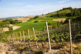Italian vineyard: Monferrato — Stock Photo
