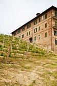 Italian vineyard - Monferrato — Stock Photo