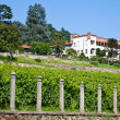 Italian charming villa in vineyard — Stock Photo