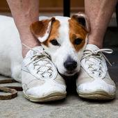 Sevimli köpek koruma için arıyorsunuz — Stok fotoğraf
