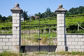 Italian charming villa in vineyard — Stock Photo