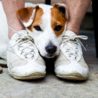 Cute dog looking for protection — Stock Photo