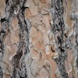 Tree rind background — Stock Photo #6021786
