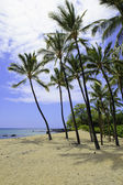 Beach in hawai — Stock Photo