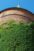 Ivy Covered Historic Tower in Riga, Latvia — Stock Photo