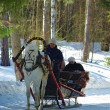 Horse sledge — Stock Photo