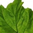 Stock Photo: Green leaf background.