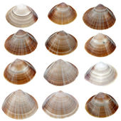 Detailed sea shells — Stockfoto