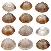Gedetailleerde zeeschelpen — Stockfoto