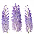 Wisteriflowers — Stock Photo #5558335