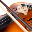 Violin close up - Stock fotografie