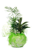 観葉植物 — ストック写真