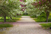 Country Lane in Spring — Stock Photo