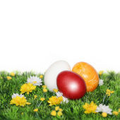 Red egg in the foreground — Stock Photo
