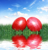 Red eggs in the grass — Stock Photo