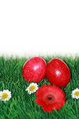 Red Easter eggs in grass — Stock Photo