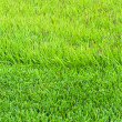 Border trimmed and overgrown grass — Stock Photo
