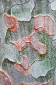 Texture of the bark of a tree — Stockfoto