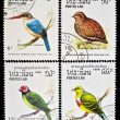 Stock Photo: Collection of birds stamps.