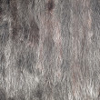 Mink fur. — Stock Photo