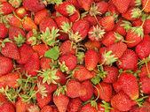 新鮮なイチゴ. — ストック写真