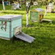 Stock Photo: Many old hives placed near trees
