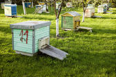 Many old hives placed near trees — Stock Photo